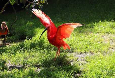 Mein Lieblingsbild aus dem Weltvogelpark Walsrode.
