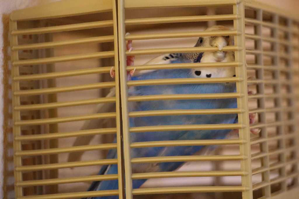 Lass mich sofort raus!