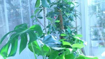 Blumenfenster Vogelzimmer