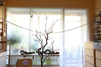 Fensterfront Vogelzimmer