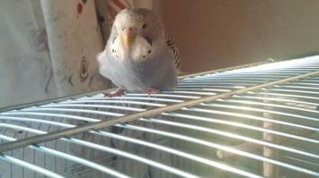 Fehlkauf Vogelkäfig verzinkt