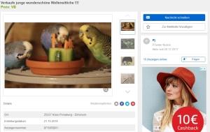 Wellensittich Kleinanzeigen Online kaufen
