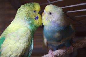 wellensittiche blog bird lamp vogellampe bella und bonito