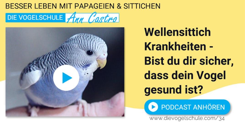 Wellensittiche Blog Podcast Teil 3 Krankheiten ann castro und wencke sabrina schacht Slider